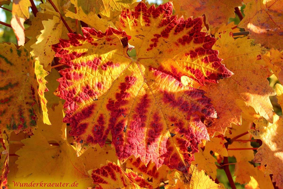 Herbst Sprüche